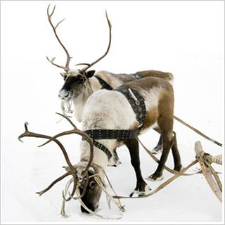 Festive Lapland Holiday Collection Transun