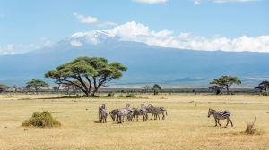 Kenya Beach and Safari