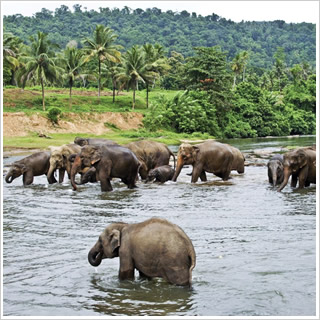 Wendy Wu Highlights of Sri Lanka