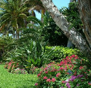 Spa Travel Bahamas