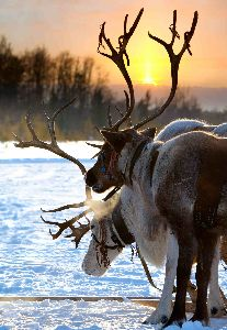 Lapland