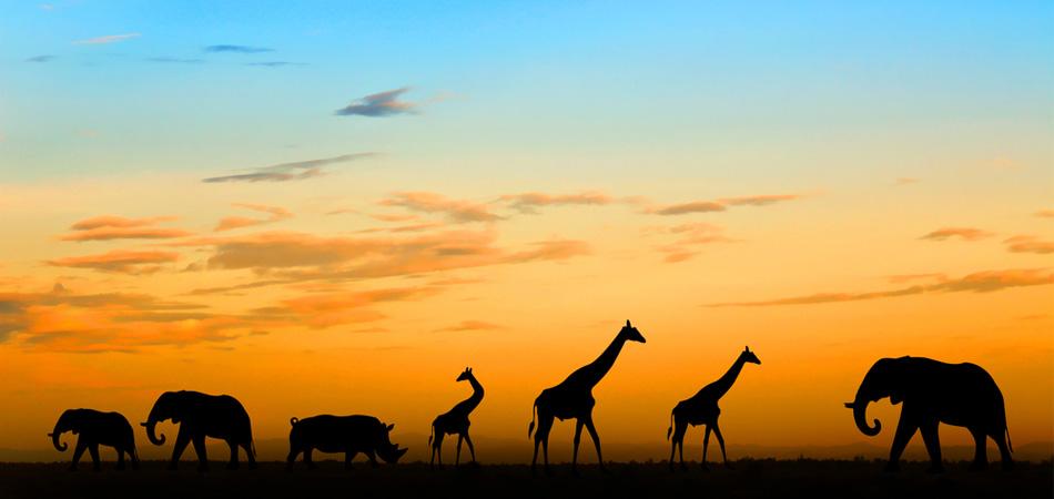 Kenya_kanoo_travel_jpeg